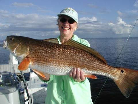 New orleans fishing charter guide service jean lafitte for New orleans fish